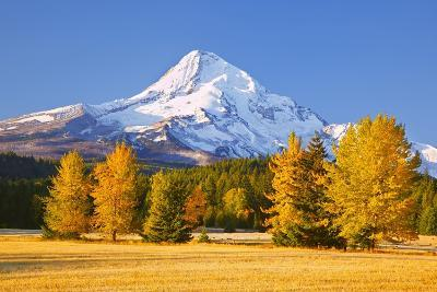 Sunrise over Mt. Hood and Fall Color Trees, Hood River, Oregon Cascades-Craig Tuttle-Photographic Print