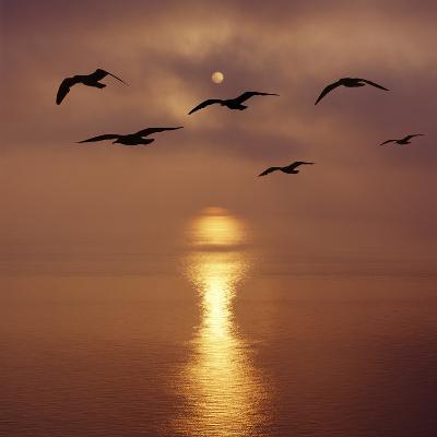 Sunrise over the Sea with Seagulls, UK-Mark Taylor-Photographic Print