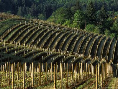 Sunrise over Vineyard in Red Hills above Dundee, Oregon, USA-Janis Miglavs-Photographic Print