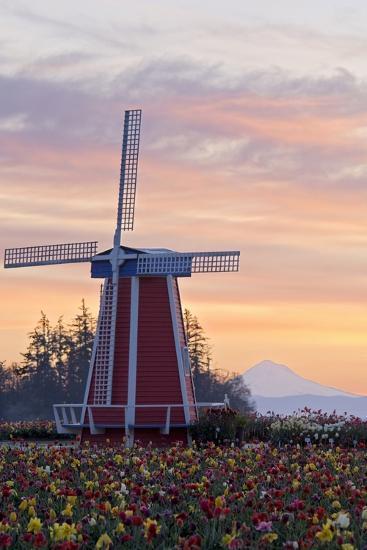 Sunrise over Wooden Shoe Tulip Farm and Mt. Hood; Woodburn, Oregon, USA-Design Pics Inc-Photographic Print