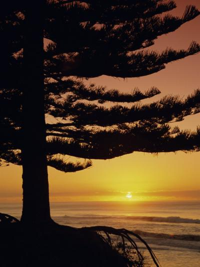 Sunrise, Pine Beach, Gisborne, East Coast, North Island, New Zealand, Pacific-Dominic Webster-Photographic Print