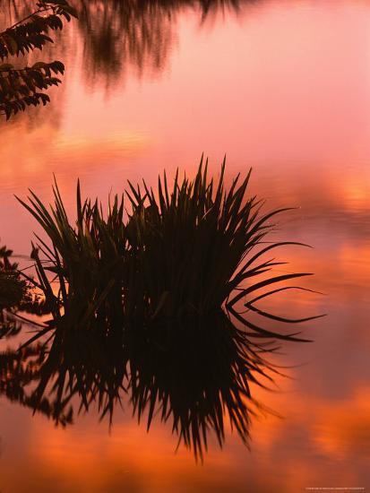 Sunrise Reflection in Swampy Wilderness, Wakodahatchee Preserve, Florida, USA-Jerry Ginsberg-Photographic Print