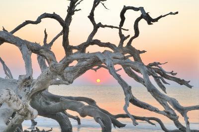 Sunrise Sentinel-Steve Vaughn-Photographic Print