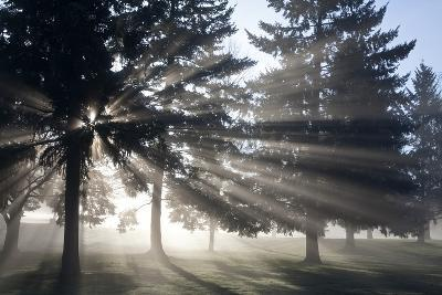 Sunrise Through Fog and Trees, Willamette Valley, Oregon-Craig Tuttle-Photographic Print