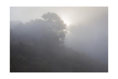 Sunrise Through Fog-Henri Silberman-Photographic Print