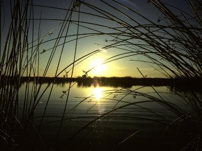 Sunrise Thru the Rushes at Market Lake, Idaho, Market Lake Wildlife Refuge, Idaho-Michael S^ Quinton-Photographic Print