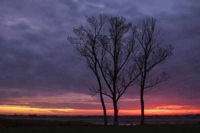 Sunrise Trees at Ogunquit, Maine Coast-Vincent James-Photographic Print