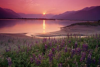 Sunrise Twentymile River and Lupine Sc Ak Summer Scenic-Design Pics Inc-Photographic Print