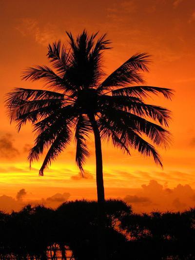 Sunrise with Palm Tree-Wonderful Dream-Art Print