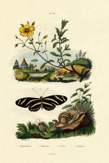 Sunrose, 1833-39--Giclee Print