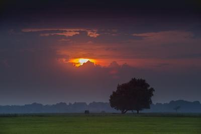 Sunset Above Field with Tree, Dykhausen, Sande, Frisia, Lower Saxony, Germany-Axel Ellerhorst-Photographic Print