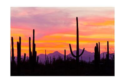 Sunset and Cactus Photograph-Lantern Press-Art Print