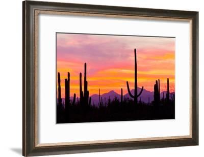 Sunset and Cactus Photograph-Lantern Press-Framed Art Print