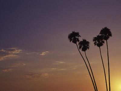 Sunset and Palm Trees, Laguna Beach, CA-Mitch Diamond-Photographic Print