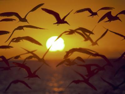 Sunset and Seagulls on Green Key, Port Richey-Dennis Macdonald-Photographic Print