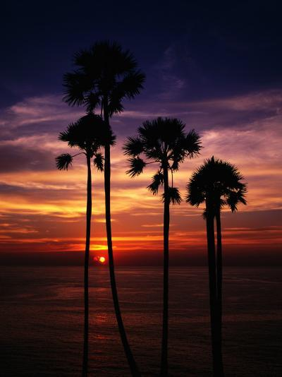 Sunset and Silhouetted Palm Trees at Phrom Thep Cape, Thailand-Manfred Gottschalk-Photographic Print