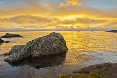 Sunset, Bird Island, Point Lobos State Reserve, California, USA-Michel Hersen-Photographic Print