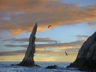 Sunset, Brown Pelicans on Rock Formation, Cabo San Lucas, Mexico-Tim Fitzharris-Photographic Print