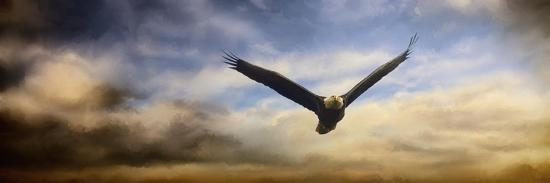 Sunset Flight-Jai Johnson-Giclee Print
