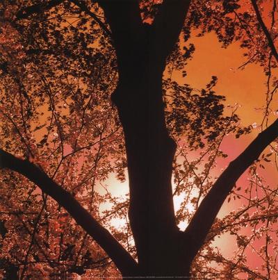 Sunset Forest I-M^J^ Lew-Art Print