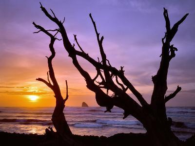 Sunset Framed by Driftwood, Cape Meares, Oregon, USA-Jaynes Gallery-Photographic Print