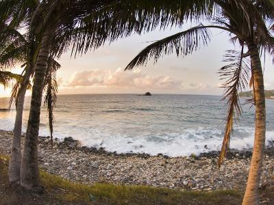 Sunset Framed by Palm Trees on a Rocky Beach-James Forte-Photographic Print