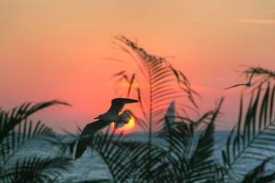 Sunset Gull and Fronds-Robert Goldwitz-Photographic Print