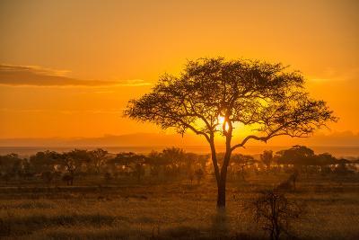 Sunset in Serengeti National Park-Tom Murphy-Photographic Print