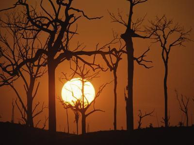 Sunset in Tropical Rainforest after Destruction by Fire, Brazil-Martin Dohrn-Photographic Print
