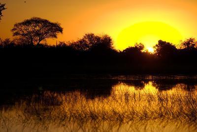 Sunset, Kwetsani Camp, Botswana-Anne Keiser-Photographic Print