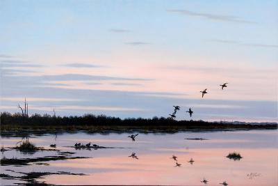 Sunset March Black Ducks-Wilhelm Goebel-Giclee Print