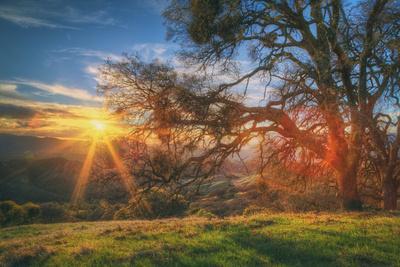 https://imgc.artprintimages.com/img/print/sunset-oak-mount-diablo-state-park-northern-california_u-l-pq7urm0.jpg?p=0