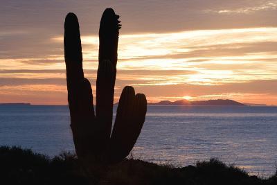 Sunset off Baja Coast-DLILLC-Photographic Print