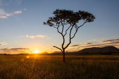 https://imgc.artprintimages.com/img/print/sunset-on-a-beautiful-cerrado-vegetation-landscape-with-one-single-lonely-tree-silhouette-chapada_u-l-q1gx2n10.jpg?p=0