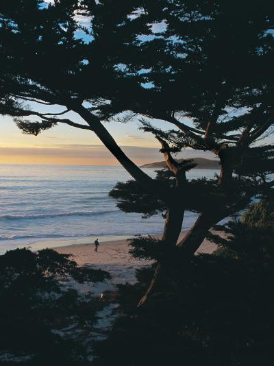 Sunset on Beach with Trees, CA-Claire Rydell-Photographic Print