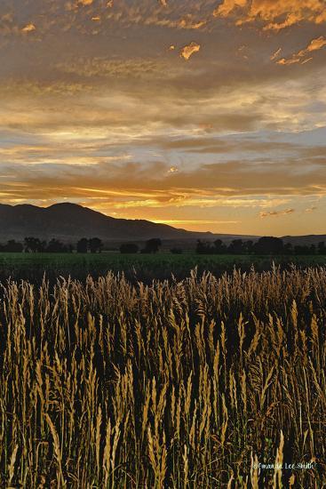 Sunset over Bear Tooth-Amanda Lee Smith-Photographic Print