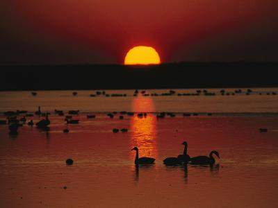 Sunset over Chincoteague Island Marsh and Geese, Virginia--Photographic Print