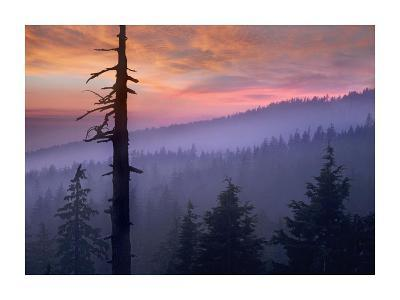 Sunset over forest, Crater Lake National Park, Oregon-Tim Fitzharris-Art Print