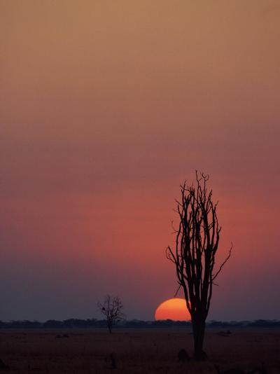 Sunset over the African Plain-Beverly Joubert-Photographic Print
