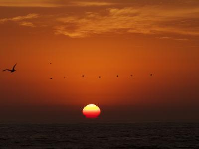 Sunset over the Pacific Ocean with a Brown Pelican in Flight-Tim Laman-Photographic Print