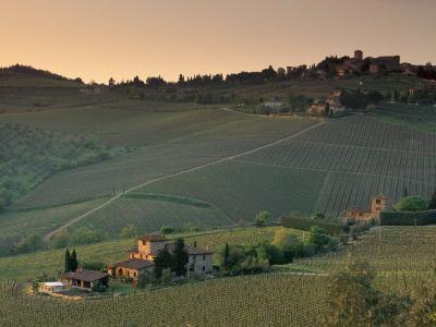 Sunset over Vineyards Near Panzano in Chianti, Chianti, Tuscany, Italy, Europe-Patrick Dieudonne-Photographic Print