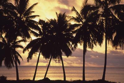 Sunset (Palm Trees in Silhouette),Aitutaki,Cook Islands-Design Pics Inc-Photographic Print