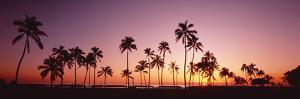Sunset Palm Trees Oahu Island Hi USA