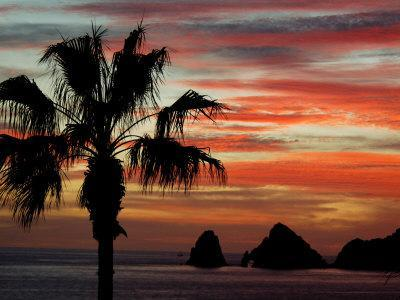 https://imgc.artprintimages.com/img/print/sunset-palm-with-rock-formation-los-arcos-in-the-distance-cabo-san-lucas-baja-california-mexico_u-l-pxppl20.jpg?p=0