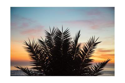 https://imgc.artprintimages.com/img/print/sunset-palms-ii_u-l-q1bzpnu0.jpg?p=0