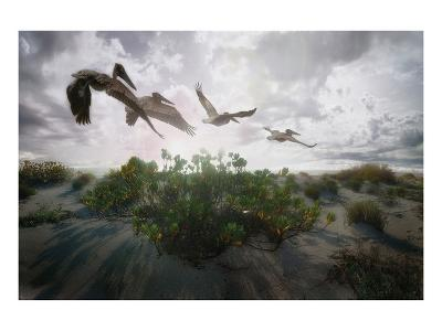 Sunset Pelicans-Steve Hunziker-Art Print