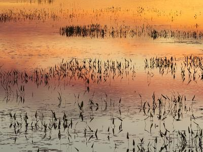 Sunset Reflections on Tupper Lake-Michael Melford-Photographic Print