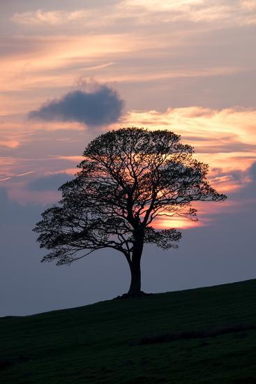 Sunset Sentinel-Doug Chinnery-Photographic Print