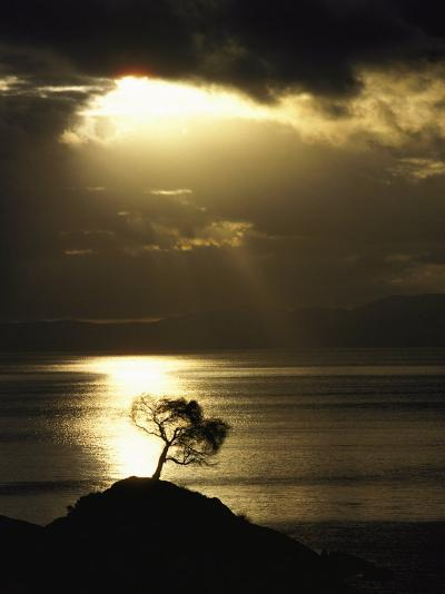 Sunset Silhouettes a Lone Tree on a Hill Overlooking the Ocean-Jason Edwards-Photographic Print