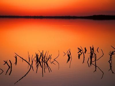 Sunset Silhouettes of Dead Tree Branches Through Water on Lake Apopka, Florida, USA-Arthur Morris-Photographic Print